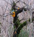 Orange fungus growing on a tree in Dunvegan wood.