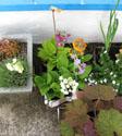 Studio plants on the patio.
