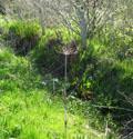 Spring vegetation at Roskhill.